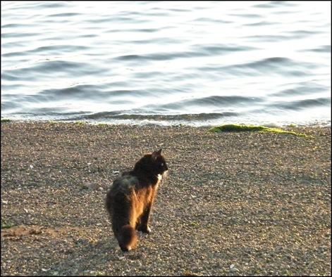 Harstine Vacation July 2008 Sun Shines on Mojo