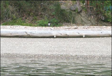 Harstine Vacation July 2008 Mojo from Boat