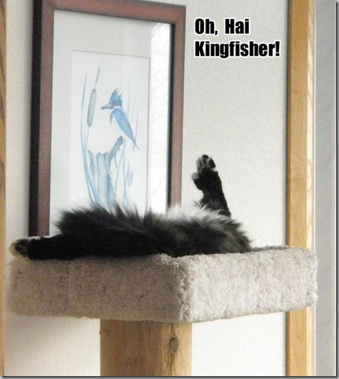 Oh Hai Kingfisher