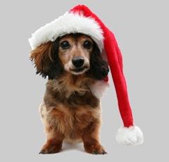 Bailey Santa2