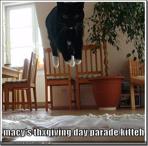 funny-pictures-macys-parade-cat