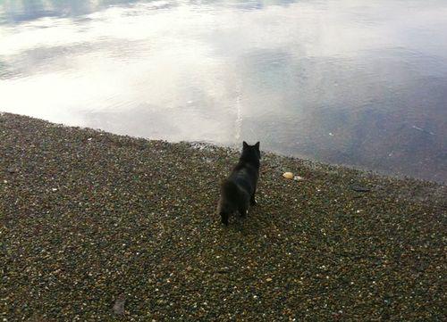 Beach walk 01-21-10