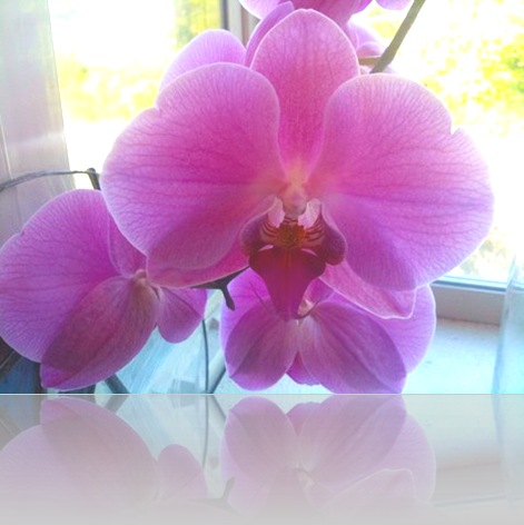 orchid 05-07-10-enhanced