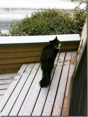 Mojo in the Snow