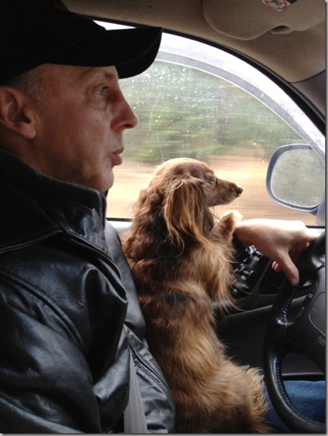 Bailey the Navigator