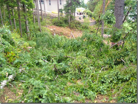 3 More Firs Down 7-28-12