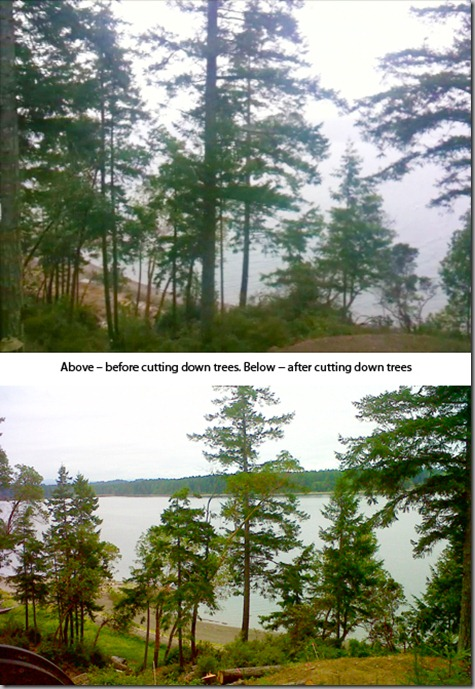 Before and After all trees 8-19-12