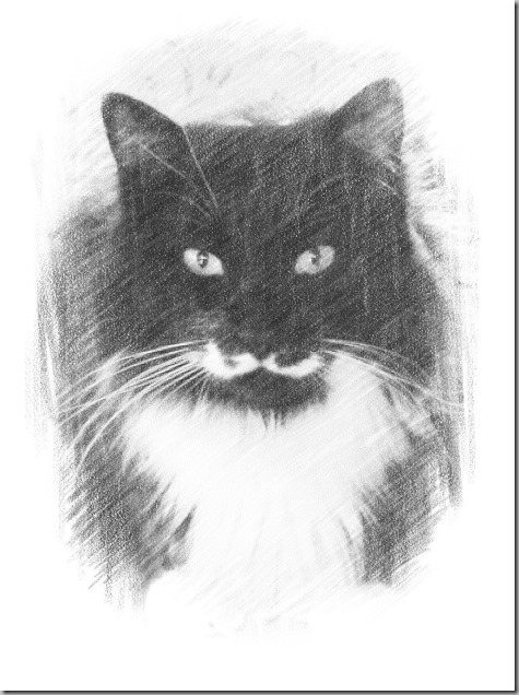 Pencil Art of Mojo