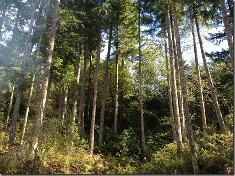 Still lots of pretty trees 10-20-12