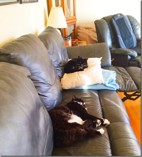 Wylie and Mojo Sleeping Together - sort of