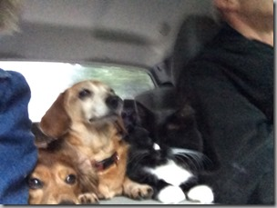 Critters Drive Home-2  3-16-14