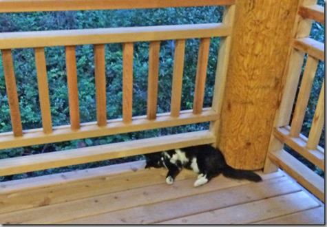 Silly Cat 7-12-14