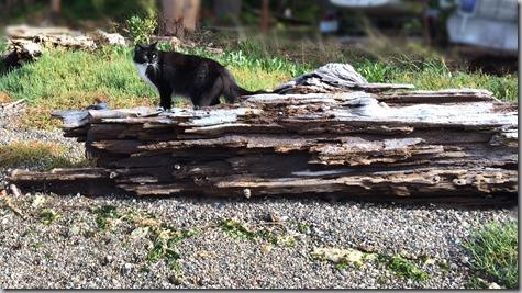 Mojo Log Cat 10-19-14