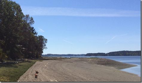 Beach Walk with Weenies 4-16-15