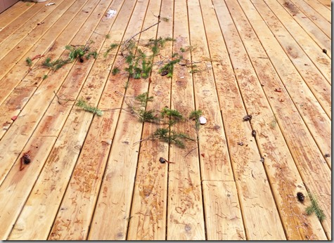 Messy After Wind Storm 8-29-15