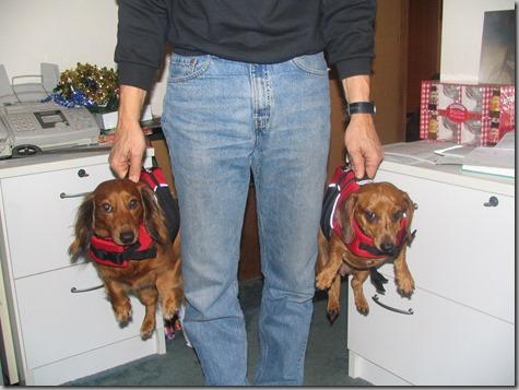Dog Coats 007