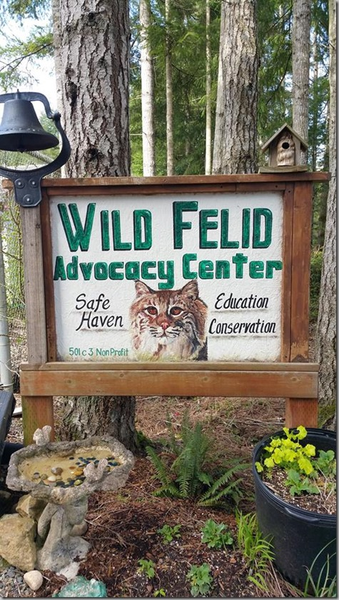 Felid Advocacy Center Safe Haven