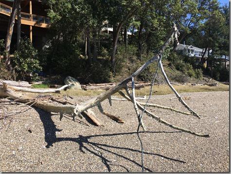 Driftwood 4-21-17