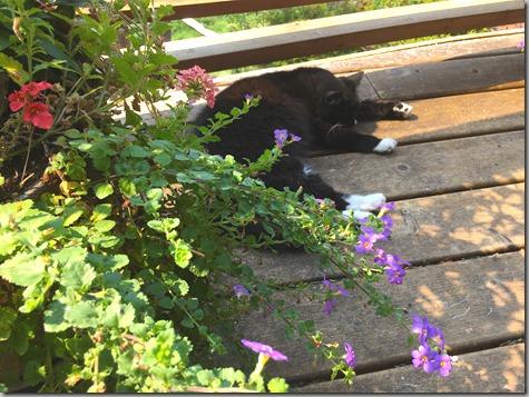 Cat Days of Summer 8-28-17