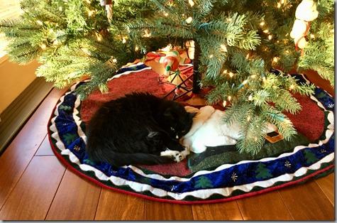 Wylie Under Xmas Tree 12-5-17
