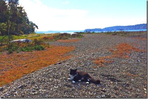 Beach Cat 10-19-14
