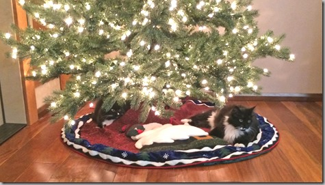 Wylie and Mojo under Christmas Tree 2014 11-28-14