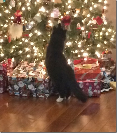 You Can Even See Her Paw 12-20-14