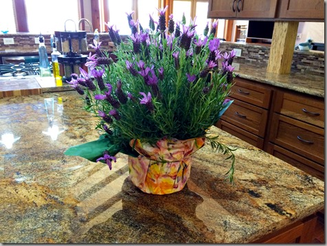 Mother's Day Lavendar from Joh 5-8-15