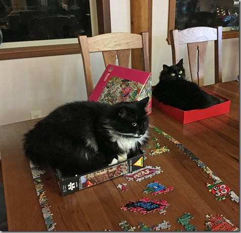 Puzzle Cats 12-15-15