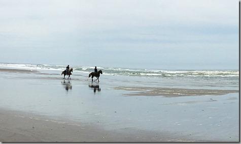 Horses at the Ocean Long Beach closeup 6-1-16