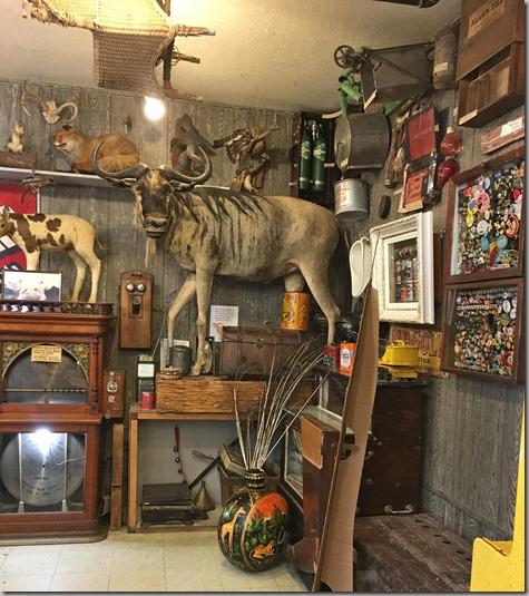 Weird Museum Long Beach-2 6-1-16
