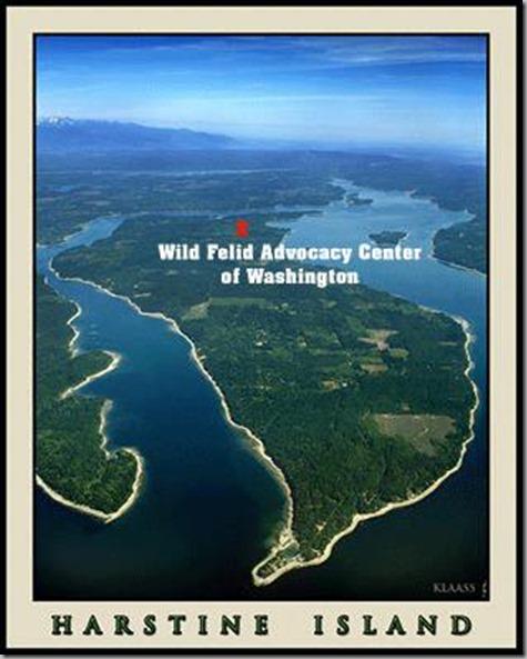 Felid Advocacy Center on Harstine Island