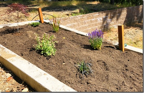 Driveway bed planted-3 6-11-18