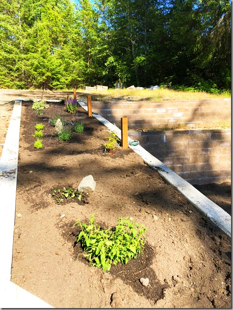 Driveway bed planted-4 6-11-18