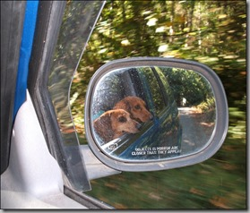 dogs in mirror closer than appear