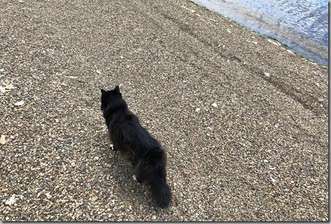 Mojo Beach Walk 7-8-18