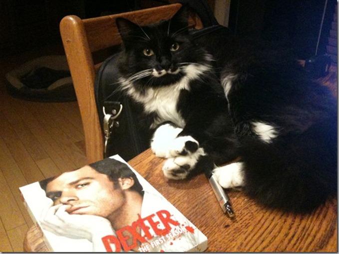 Mojo as Dexter
