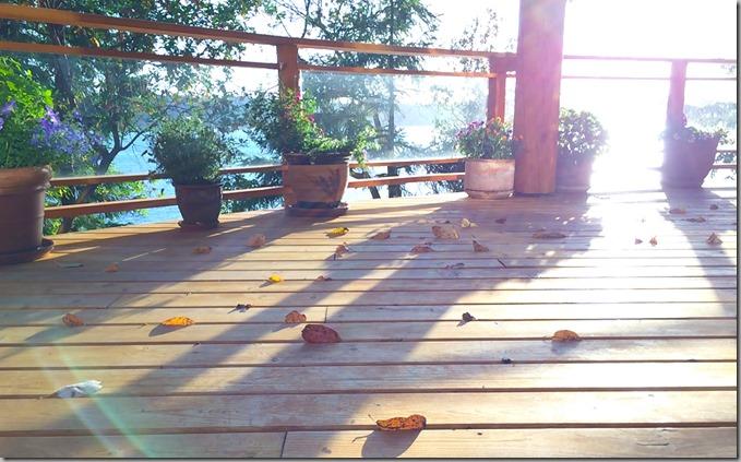 Madrona Leaves-3  6-10-15