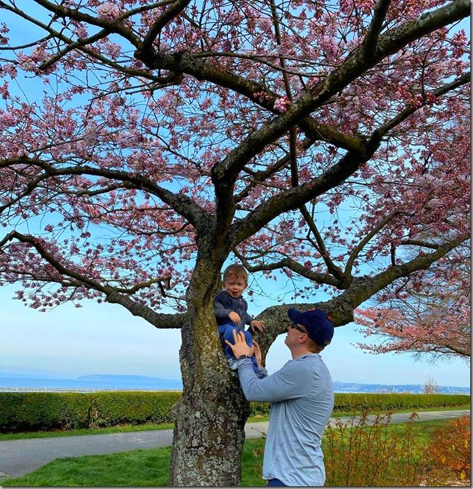 Cherry Trees 3-22-20