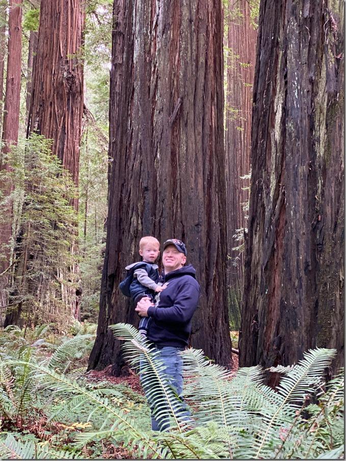 Redwoods-15 12-18-19