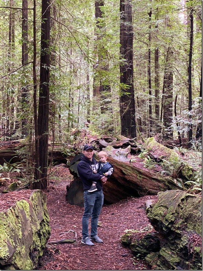 Redwoods-13 12-18-19