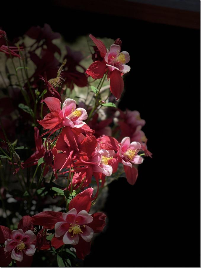 Flower-1 5-10-20