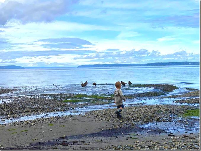 Quinn on Beach with Geese 6-10-20