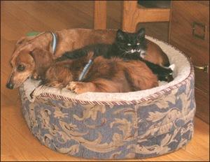 Fuzzy Threesome