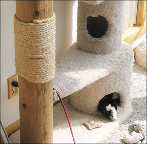 Mojo cat tree
