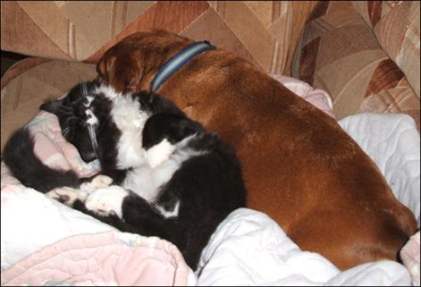 Mojo cuddles with Peanut