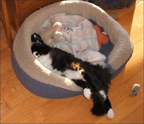 OD on catnip