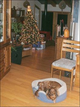 doggies and Christmas tree