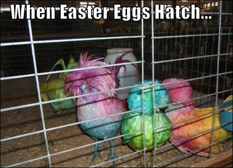 funny-pictures-easter-egg-birds