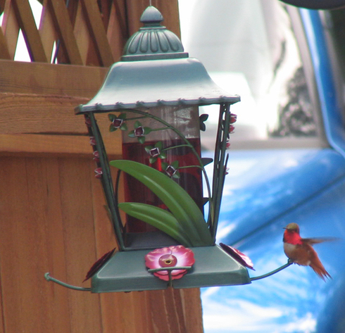 Hummingbird_at_feeder